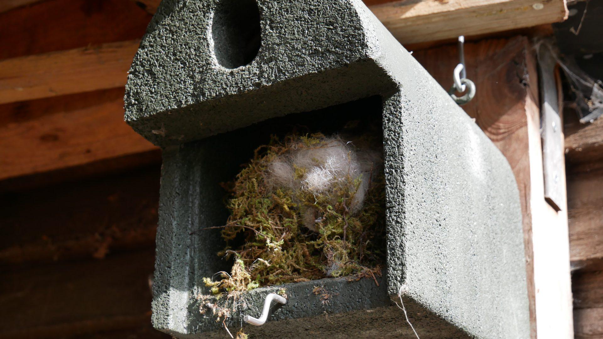 In Morscholz kuschelt ein Siebenschläfer im Nistkasten